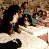 1, 2, 3, 4, 5 chiens  🐶 🐶🐶🐶🐶  #chambredhotes #guesthouse #maisondhotes #lefooding #weekend #uzes #southoffrance #slowlife #maisonpleinsud