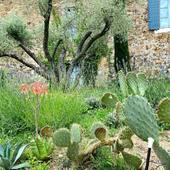  J A R D I N   #chambredhotes #bedandbreakfast #uzes #provence #gard #lefooding #southoffrance
