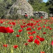 La Bruguière c'est aussi ça ! Beau dimanche au soleil ☀️   #chambredhotes #bedandbreakfast #uzes #provence #gard #lefooding #southoffrance